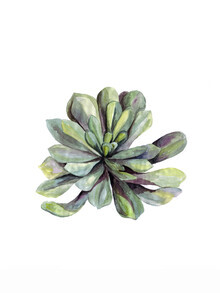 Christina Wolff, Mantika Botanical Succulent (Germany, Europe)