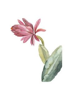 Christina Wolff, Mantika Botanical Kaktusblume pink (New Zealand, Oceania)