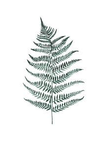 Christina Wolff, Mantika Botanical Silverfern (New Zealand, Oceania)