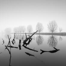 Thomas Wegner, Bäume im Nebel (Deutschland, Europa)