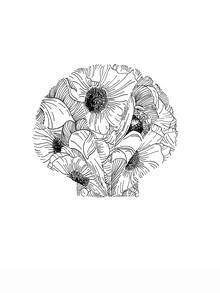 Christina Wolff, Mantika Blumen Muschel (Neuseeland, Australien und Ozeanien)