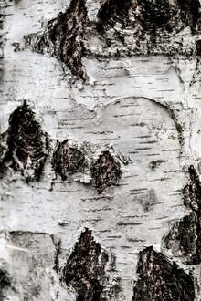 Mareike Böhmer, Birch Tree 2 (Deutschland, Europa)