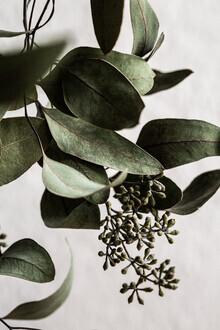 Mareike Böhmer, Eucalyptus 10 (Deutschland, Europa)
