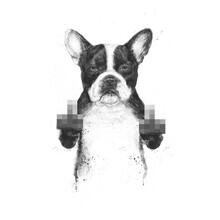 Balazs Solti, Censored dog (Hungary, Europe)