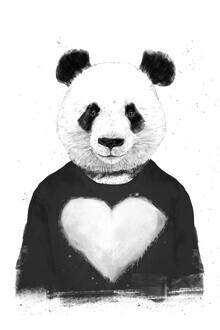 Balazs Solti, Lovely panda (Hungary, Europe)