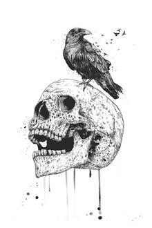 Balazs Solti, New skull (Hungary, Europe)