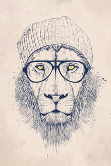 Balazs Solti, Cool lion (Hungary, Europe)