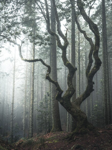 Sonja Lautner, The tree (Portugal, Europe)