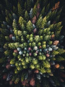 Lukas Saalfrank, Bunte Wald Bäume von oben (Deutschland, Europa)