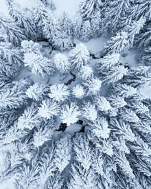 Lukas Saalfrank, Schneebedeckte Bäume von oben im Winter (Deutschland, Europa)