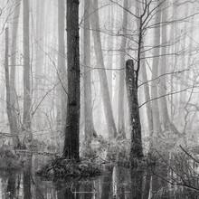 Thomas Wegner, Sumpflandschaft im Nebel (Deutschland, Europa)