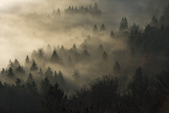 Thomas Staubli, morning mist (Switzerland, Europe)