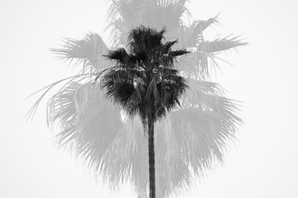 Roman Becker, Double Tree (Vereinigte Staaten, Nordamerika)