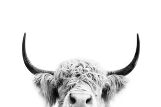 Kathrin Pienaar, Peeking COW bw (United Kingdom, Europe)