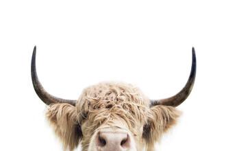 Kathrin Pienaar, Peeking cow (Großbritannien, Europa)