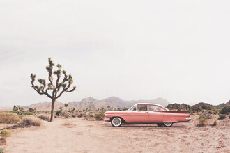 Kathrin Pienaar, California Living (United States, North America)