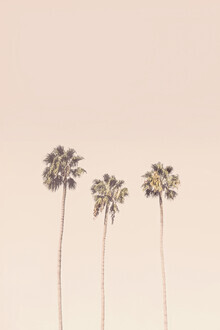 Kathrin Pienaar, Sunset Palm trees (United States, North America)