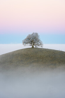 Thomas Staubli, Old linden tree (Switzerland, Europe)