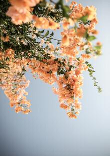 Shot By Clint, Assos Blooms (Südafrika, Afrika)