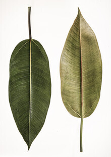 Shot by Clint, Leaf Study 5 (South Africa, Africa)