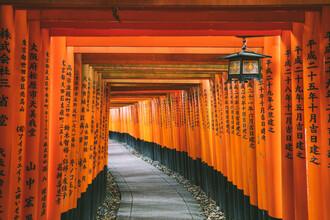 Leander Nardin, red torii in kyoto (Japan, Asia)