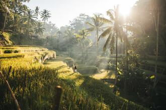 Leander Nardin, beautiful woman strolling through rice fields at sunrise (Indonesia, Asia)