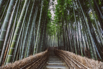 Leander Nardin, path through a bamboo forest (Japan, Asia)