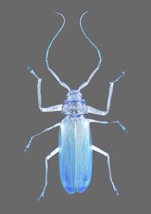 Shot by Clint, Insect Evolution (Südafrika, Afrika)
