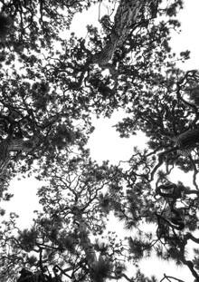 Shot by Clint, Japanese Garden 4 (Japan, Asia)