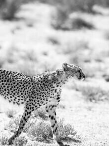 Shot By Clint, Kitty Kat (Südafrika, Afrika)