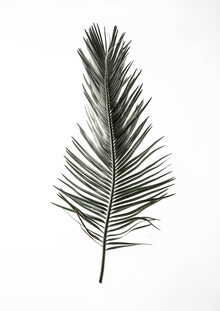 Shot By Clint, Leaf Study 3 (South Africa, Africa)