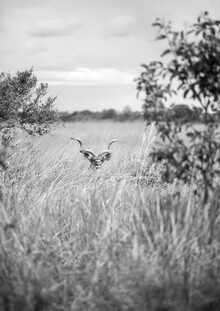Shot By Clint, Kudu (Südafrika, Afrika)