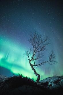 Sebastian Worm, The Aurora Tree (Norway, Europe)