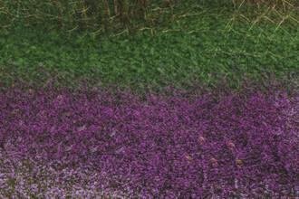 Nadja Jacke, Spring heather abstract (Germany, Europe)