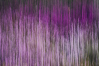 Nadja Jacke, Blurred heather in spring (Germany, Europe)