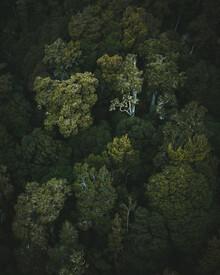 Kristof Göttling, Die grünen Riesen (Neuseeland, Australien und Ozeanien)