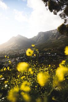Kristof Göttling, South African majesty (Südafrika, Afrika)