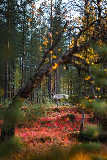 Kristof Göttling, Waldbewohner (Finnland, Europa)
