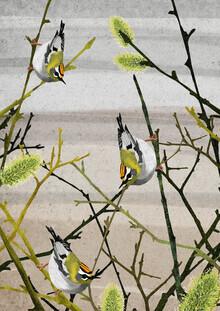 Katherine Blower, Firecrest birds (Großbritannien, Europa)