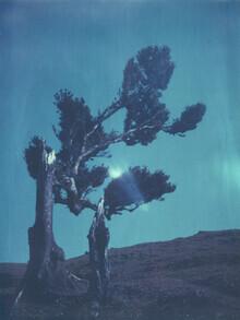Jennifer Rumbach, laurel tree (Portugal, Europe)