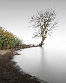 Ronny Behnert, Trasimeno Tree II | Umbrien Italien (Italien, Europa)