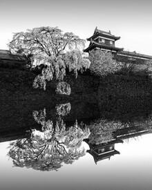 Ronny Behnert, Sakura Koriyama | Japan (Japan, Asia)