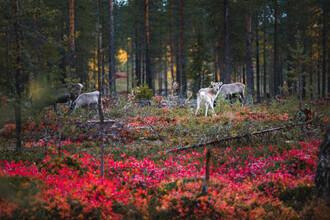 Kristof Göttling, Symbol des Nordens (Finnland, Europa)