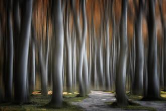 Carsten Meyerdierks, Magical Trees (Deutschland, Europa)
