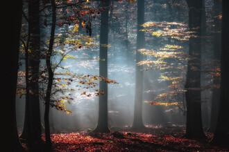 Carsten Meyerdierks, Autumnal Light (Deutschland, Europa)
