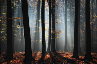 Carsten Meyerdierks, Autumn In The Woods (Germany, Europe)