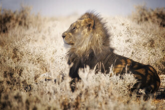 Carsten Meyerdierks, The King (Namibia, Africa)