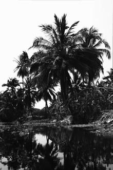 Daniela Dirscherl, Floating Market – Palmenpracht am Kanal (S/W) (Thailand, Asien)