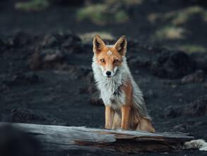 Maximilian Fischer, Staring into the Wild (Russland, Europa)