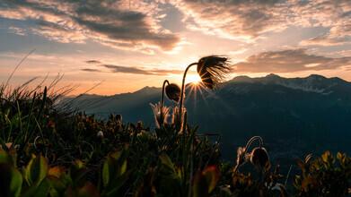 Clemens Bartl, framed sunstar (Switzerland, Europe)